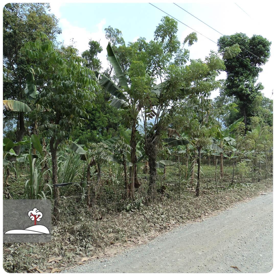 Venta de Lote de terreno ubicado en Aldea el Gancho frente a Iglesia Menonita, El Porvenir, Atlántida, Honduras
