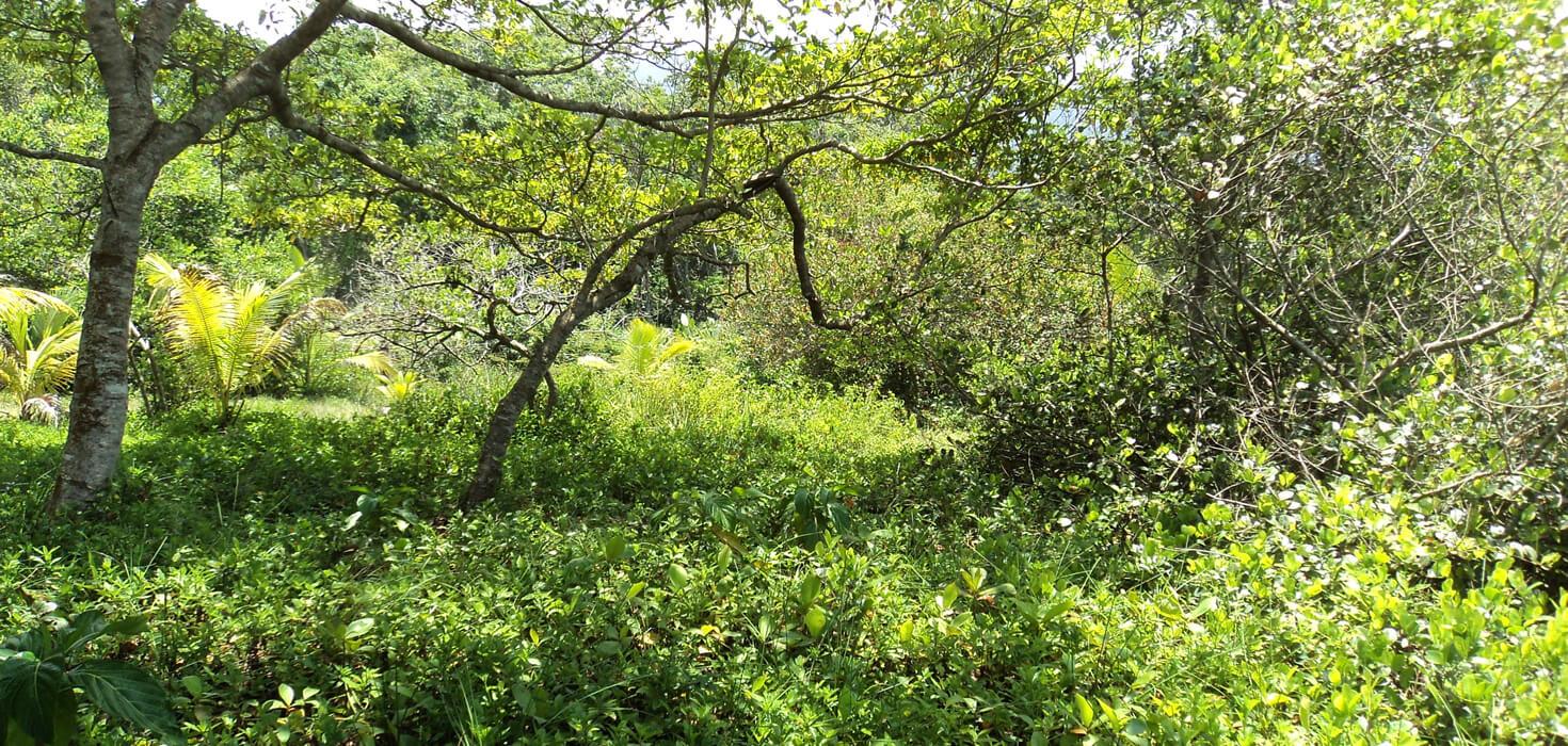 Venta de Lote de terreno ubicado en Aldea Sambo Creek, La Ceiba, Atlántida, Honduras