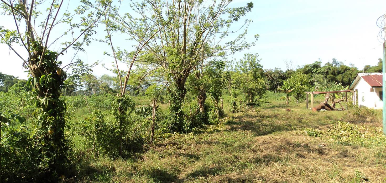 Venta de 10 lotes de terreno en colonia Los Castaños ubicado en Colonia Los Castaños, El Porvenir, Atlántida, Honduras